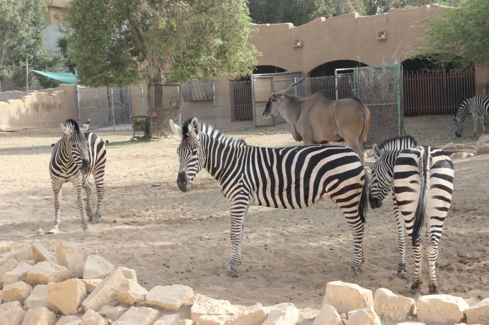 حديقة الحيوان بالرياض مواعيد الزيارة وسعر التذاكر وأهم الأنشطة الرحالة